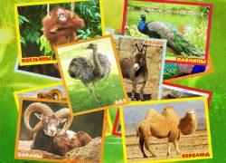 /var/www/bga32.ru/core/../uploads/2016/07/bga32 ru Zoopark Afisha 1